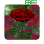3D Rose Live Wallpaper Free ratings and reviews, features, comparisons, and app alternatives