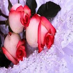 Beautiful Red Roses Wallpaper ratings and reviews, features, comparisons, and app alternatives