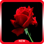 Beautiful Roses HD Wallpapers ratings and reviews, features, comparisons, and app alternatives