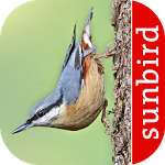 Bird Id - British Birds ratings and reviews, features, comparisons, and app alternatives