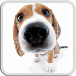 DOG LICKS SCREEN LWP FREE ratings, reviews, and more.