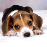 Free Puppy Dog Wallpaper ratings and reviews, features, comparisons, and app alternatives