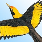 Morcombe's Birds of Australia ratings and reviews, features, comparisons, and app alternatives