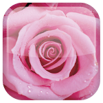 Rose Live Wallpaper ratings and reviews, features, comparisons, and app alternatives